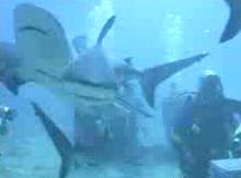 サメに餌付け1