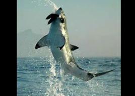 サメジャンプ2