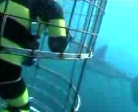 ホオジロザメ4
