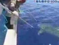 海人とサメ