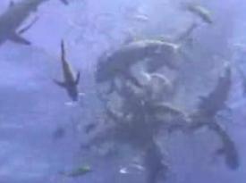サメの海へ