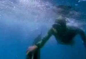ホオジロザメ10