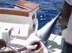 Mako Shark10