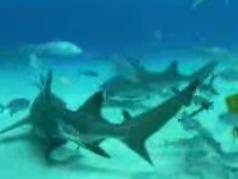 Shark Week7