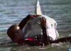 Shark Week10
