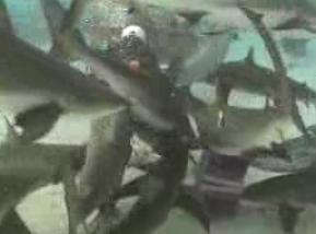 サメに餌付け6