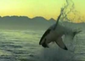 サメ -真実6-