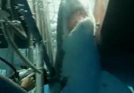危険なサメを追う