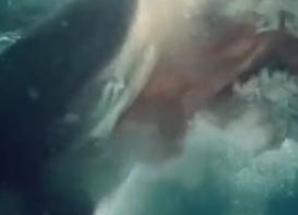 サメの戦場2