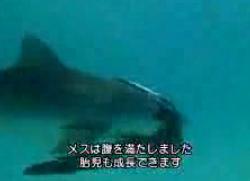 サメの戦場6
