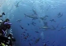 サメに餌付け8