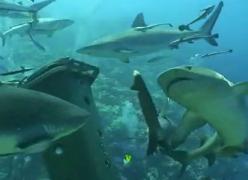 サメに餌付け9