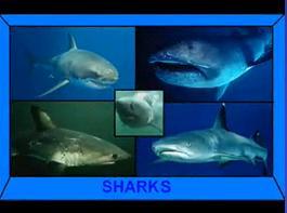いろんなサメたち