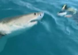 The shark is photographed3