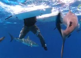 サメの群れに囲まれて