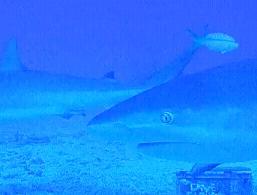 サメと戯れる5