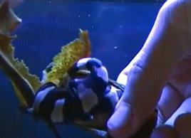 サメの誕生