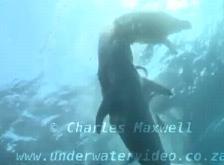 海亀を食べる
