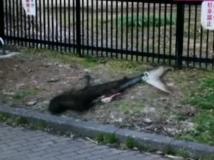 代々木公園の放置ザメ