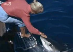 ホオジロザメをてなずける