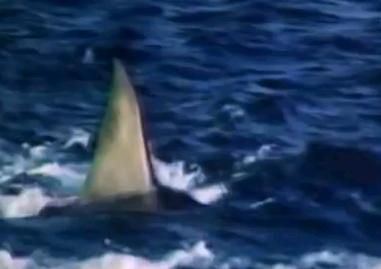 JAWS4 復讐篇 予告