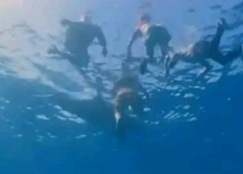 サメから人間を守ったイルカたち