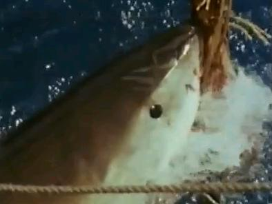Shark overseas documentary1