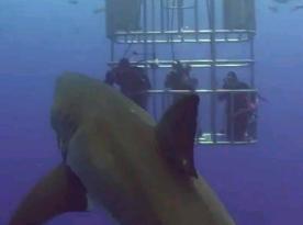 サメに糞をかけられる